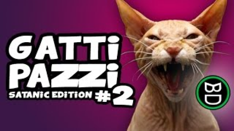 Video Divertenti Gatti